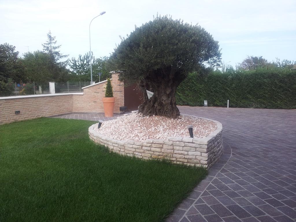 Aiuola per piante esemplari casette tettoie pergole in for Piante da aiuola