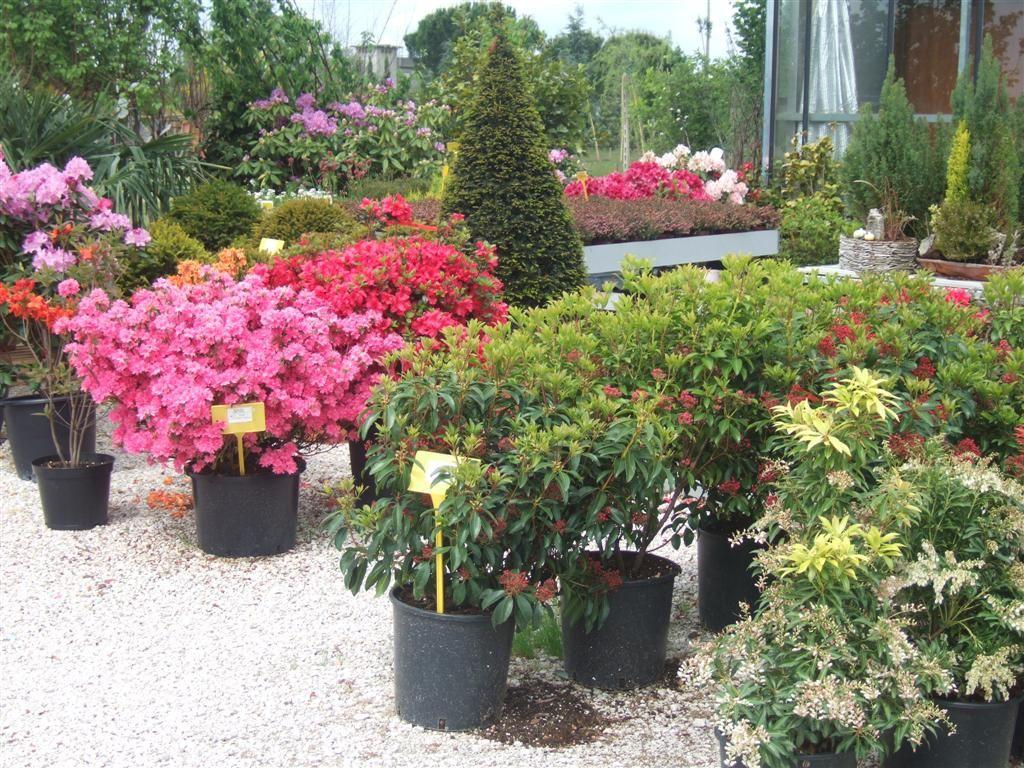 piante-da-esterno.jpg