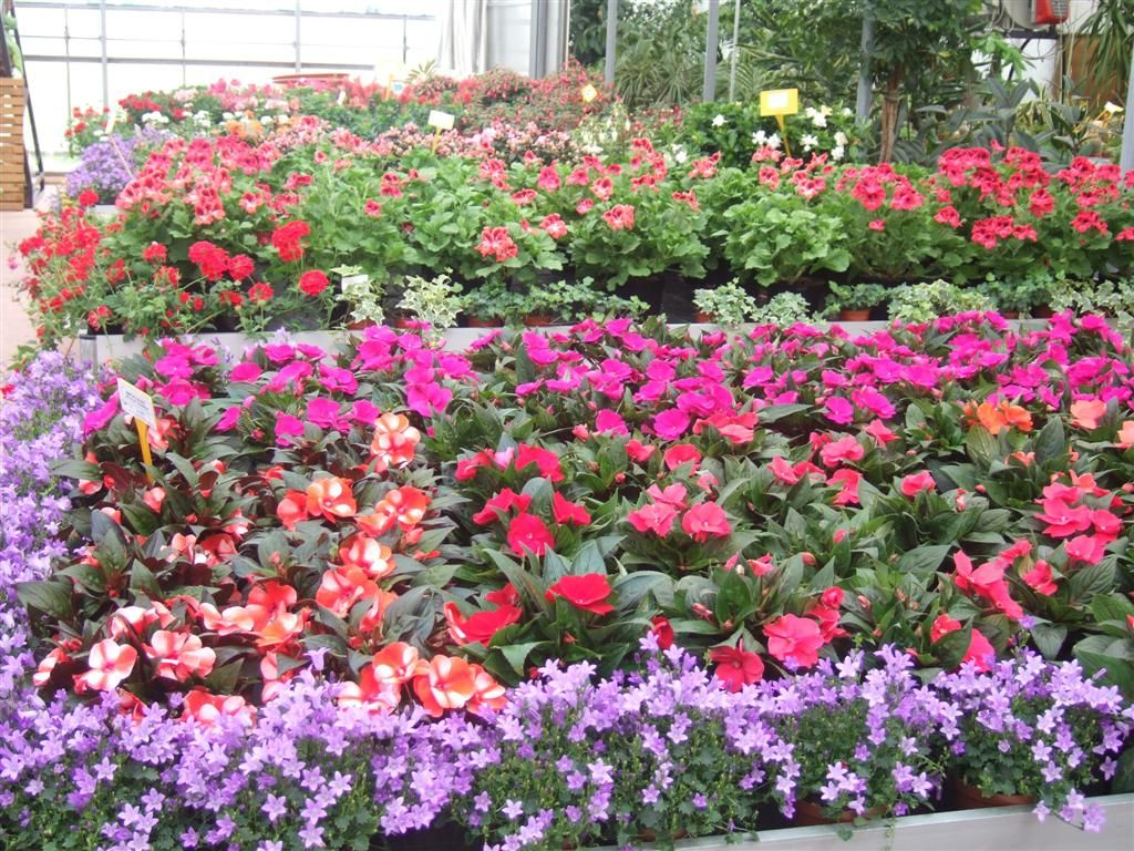 Piante e fiori casette tettoie pergole in legno box for Piante da esterno