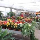 piante-da-appartamento-in-variet.jpg