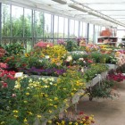 piante-fiorite-da-esterno-primavera-estate1.jpg
