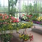 piante-fiorite-da-esterno-primavera-estate2.jpg