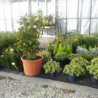 piante-per-aiuole1.jpg
